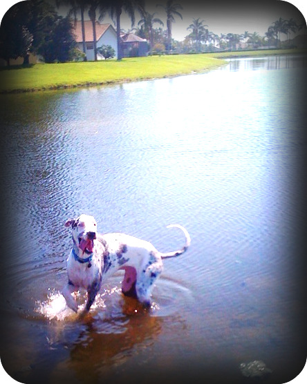 Gus in the pond