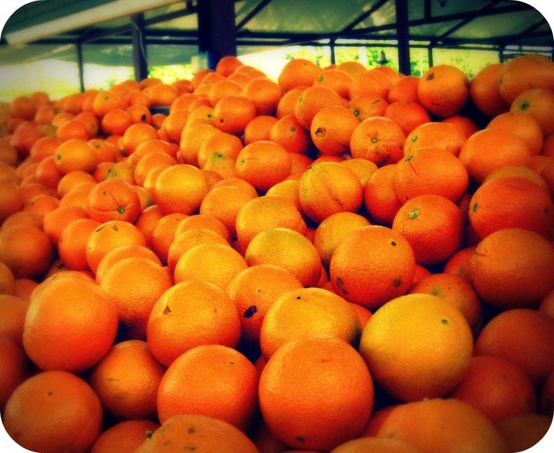 CA oranges in FL